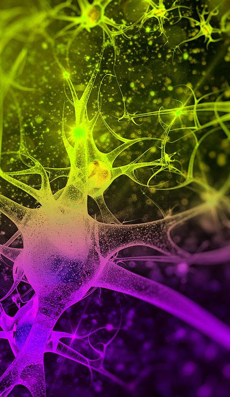neuronenbild2